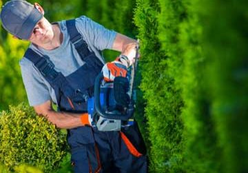 pruning mulching clean ups in Madison